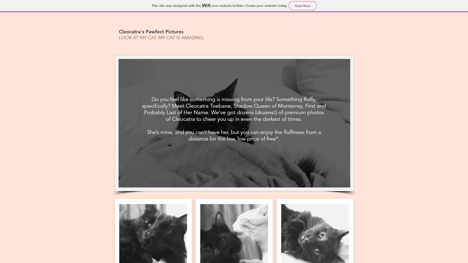 A cat-obsessed demo site built with Wix